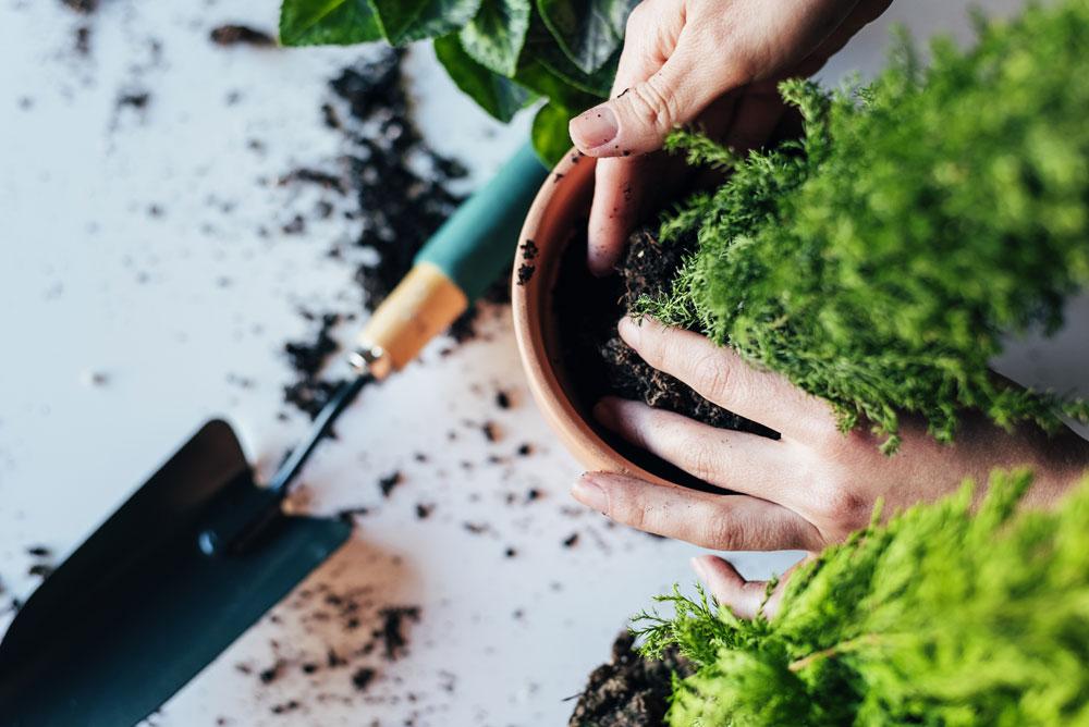 Person planting plants into pots
