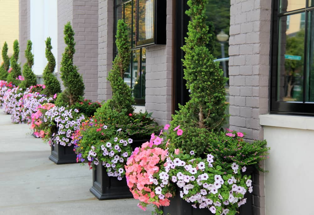 pretty flowers and plants outside building - curb appeal