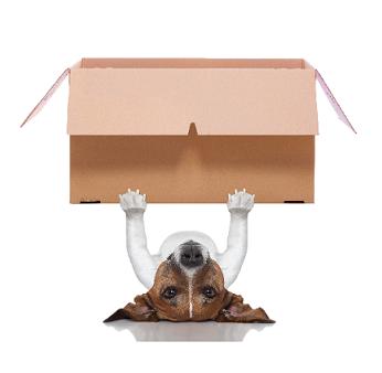 self storage mascot